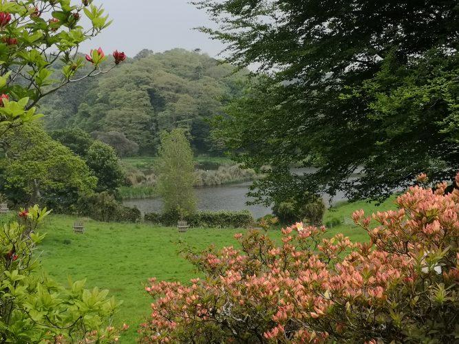 Caerhays gardens