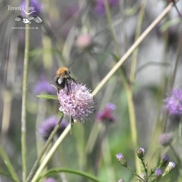 Cornwall365 Flora and Fauna guided walk