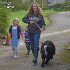 Walking Badger the pygmy goat