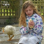 Small farm animal experience - farm holiday cottages, Padstow, Cornwall