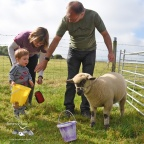 Sheep on a rope - Farmstay holiday experience, Padstow, Cornwall