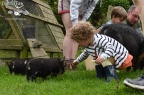 Feeding the piglets on a Farmstay holiday experience, Padstow, Cornwall