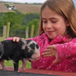 Our guests getting close to our Kune Kune piglets at 2 days old