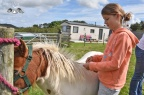 Farmstay holiday experience, Padstow, Cornwall