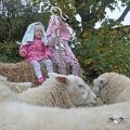Aspiring shepherds at Trevorrick Farm