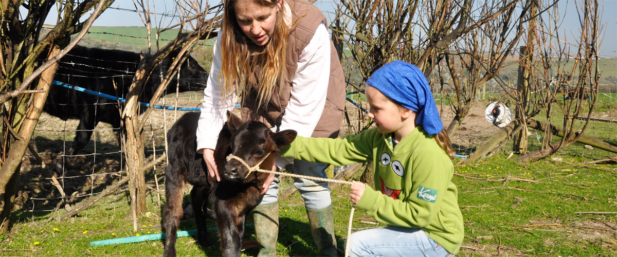 Handle a tiny Dexter calf <a href='#link'>Read more on our farm experience!</a>