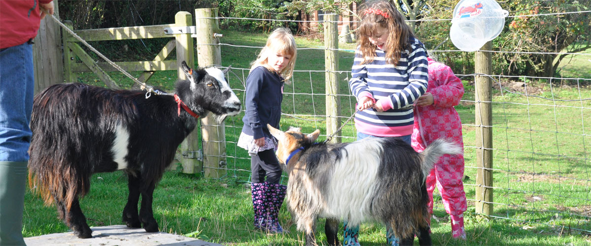 We have a pigmy goats too - Badger...