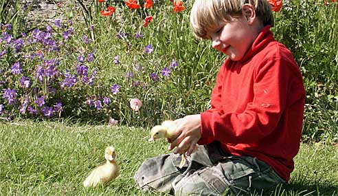 Toddler friendly farm holiday cottages in Cornwall
